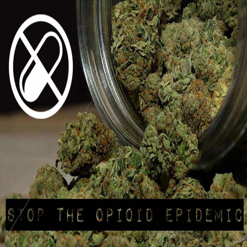 Weed Over Opioids | Northern Lights Cannabis Co